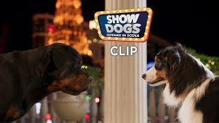"""Show Dogs - Entriamo in scena. Clip """"Max e Daisy"""""""
