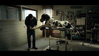 Scarica Dogman Film Completo SUHD Italiano