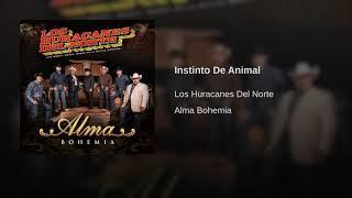 Los Huracanes del Norte - Instinto De Animal