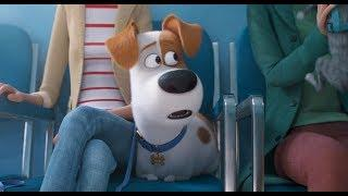 The Secret Life of Pets 2 | The Max Trailer