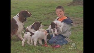 I cani dei miracoli (2003) [Italiano]