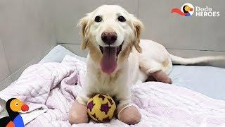 Incredible Dog Just Wants To Run — No Matter What | Dodo Heroes