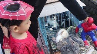 Superhero Spiderman Beli Hamster & Naik Delman keliling Kota !