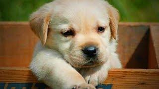Funny Cute Puppies ???????? Funny Dogs (Full) [Funny Pets]