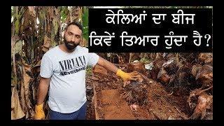 Pendu Australia | Episode 62 | Punjabi Travel Show | Banana Plantation Preparation